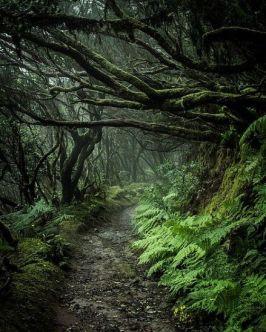 a56ecad2c0f7f7bd4fb48e73216c905e--jungle-trees-forest-trees.jpg